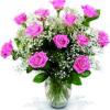 12 rose rosa