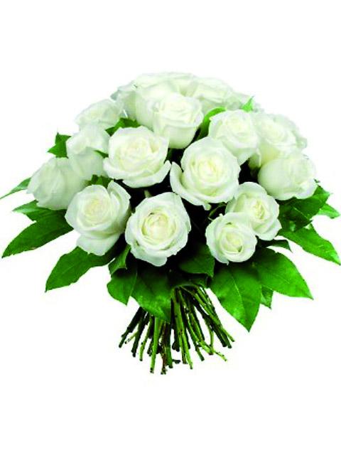 18 roselline bianche