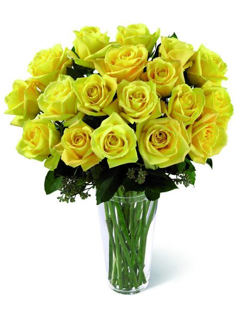 24 rose gialle