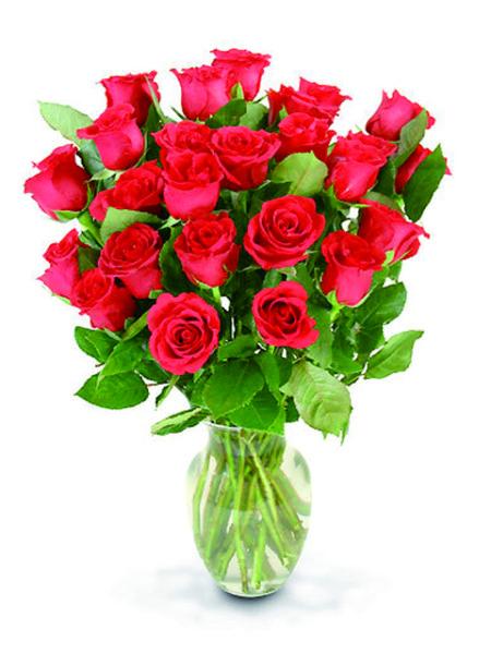 24 roselline rosse