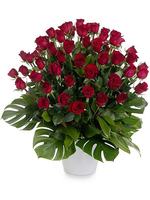 mazzo di 50 rose