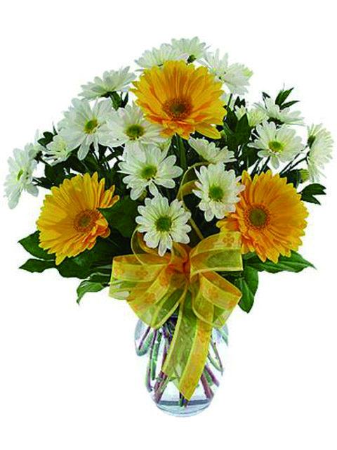 bouquet di gerbere con margherite
