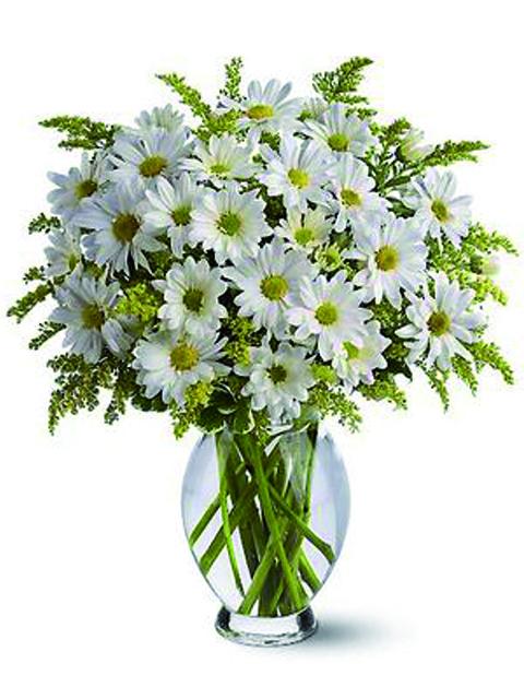 bouquet di margherite bianche