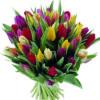 bouquet di tulipani colore