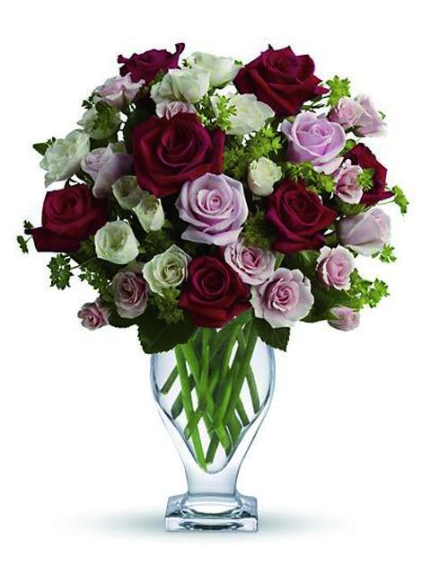 rose rosse bianche e rosa